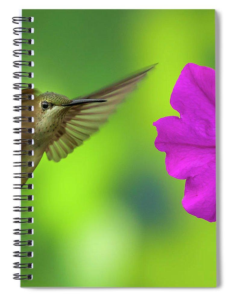 Hummingbird Spiral Notebook featuring the photograph Hummingbird And Flower by Allin Sorenson