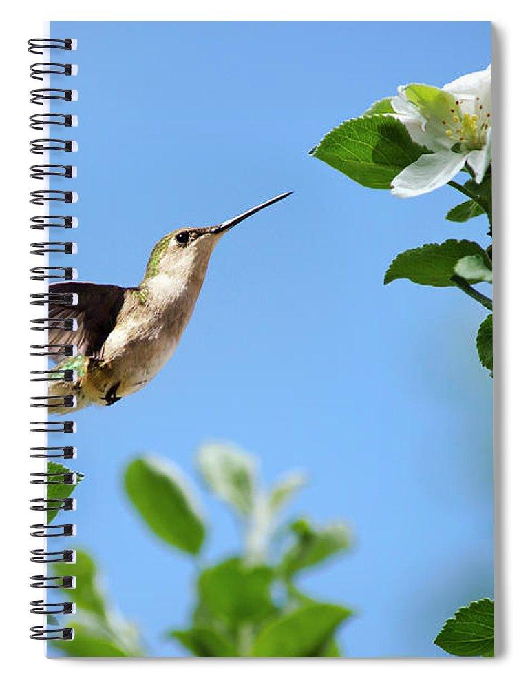 Hummingbird Spiral Notebook featuring the photograph Hummingbird Springtime by Christina Rollo