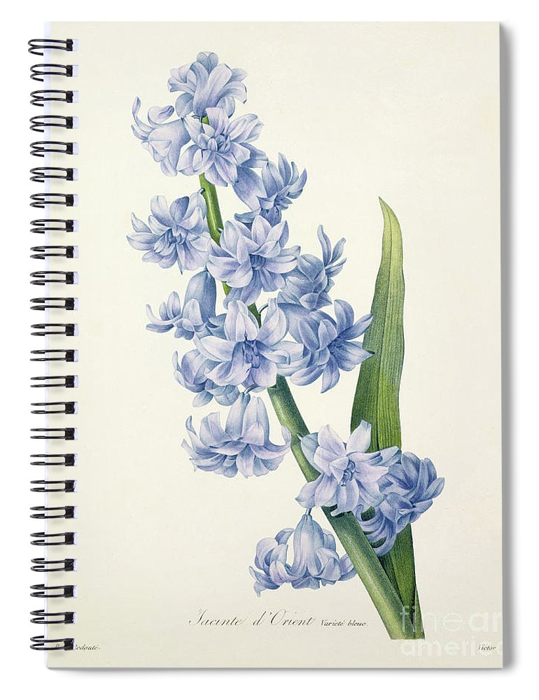 Hyacinthus Spiral Notebook featuring the drawing Hyacinth by Pierre Joseph Redoute