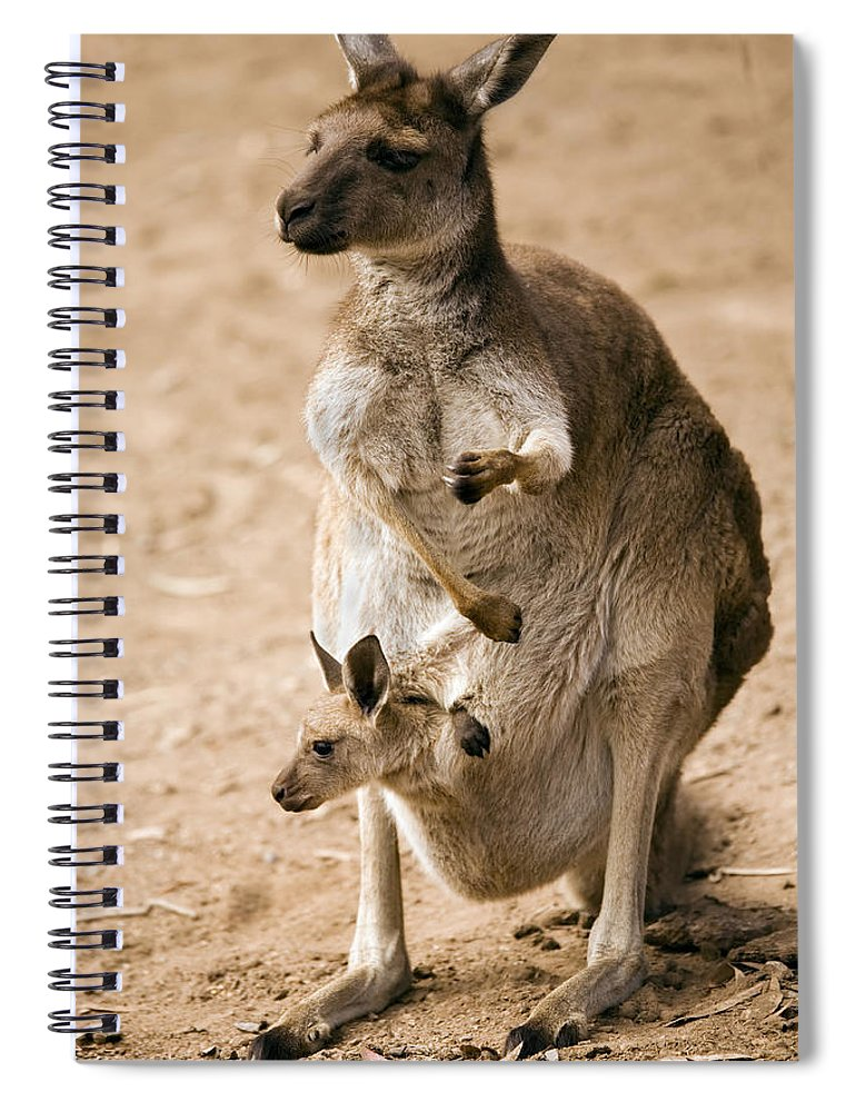 Kangaroo Spiral Notebook featuring the photograph In Mother's Care by Mike Dawson
