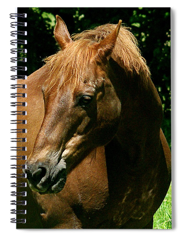 jenny Gandert Rexx red Hot Rolexx Chestnut Light Pasture Sun Shadows Darks Head Copper Spiral Notebook featuring the photograph In The Light by Jenny Gandert
