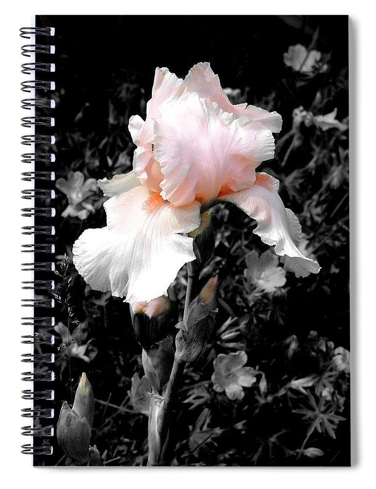 Flower Spiral Notebook featuring the photograph Iris Emergance by Steve Karol