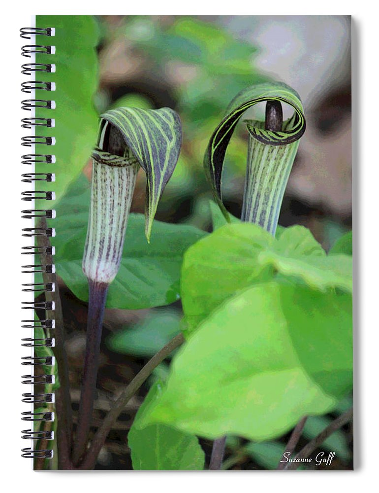 Jack In The Pulpit Spiral Notebook featuring the photograph Jack In The Pulpit Enhanced by Suzanne Gaff