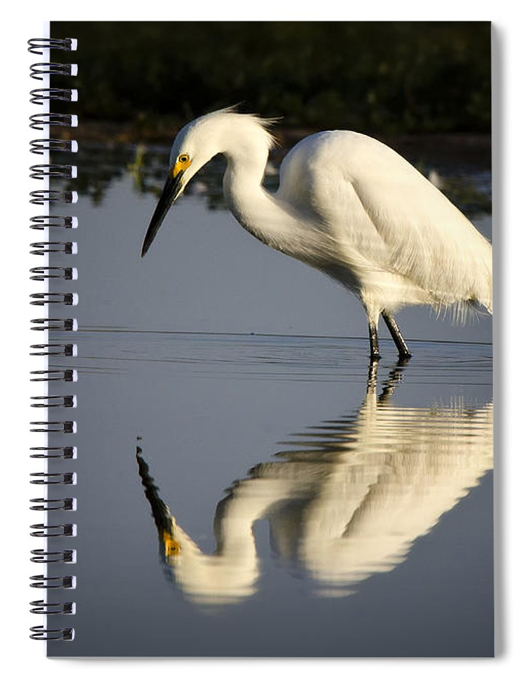 Snowy Egret Spiral Notebook featuring the photograph Just Like Looking In The Mirror by Saija Lehtonen