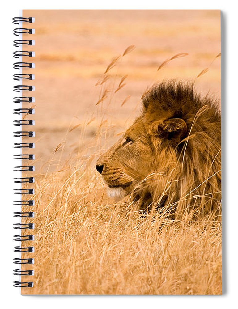 3scape Spiral Notebook featuring the photograph King Of The Pride by Adam Romanowicz