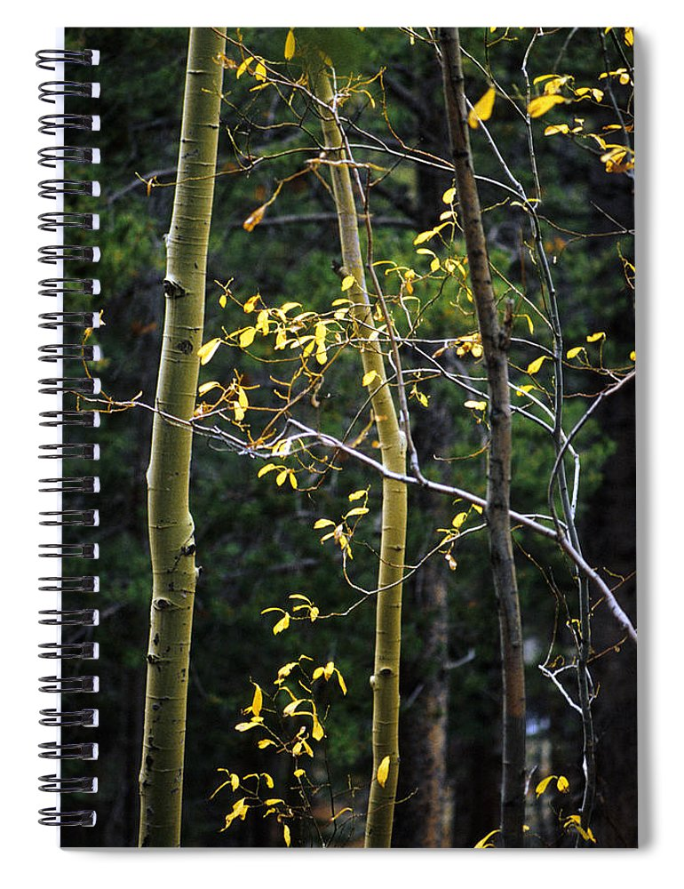 Aspen Spiral Notebook featuring the photograph Late Aspen by Jerry McElroy