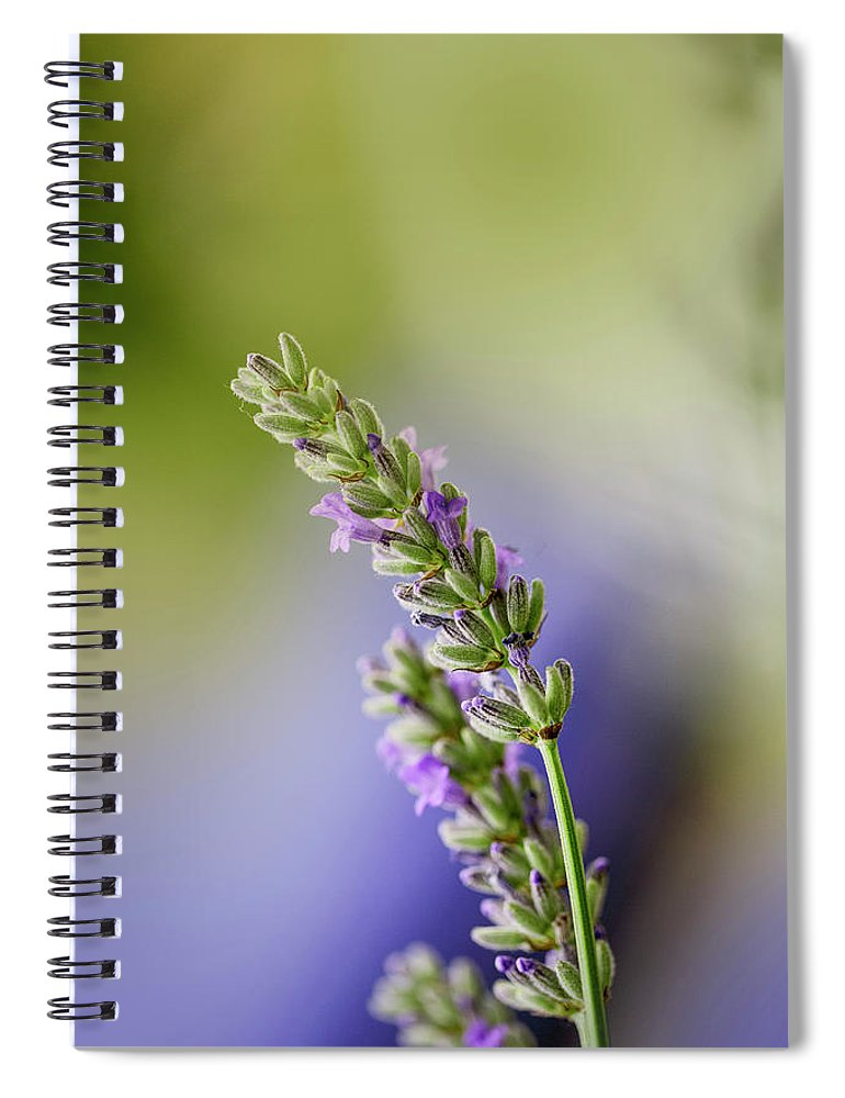 Lavender Spiral Notebook featuring the photograph Lavender by Nailia Schwarz