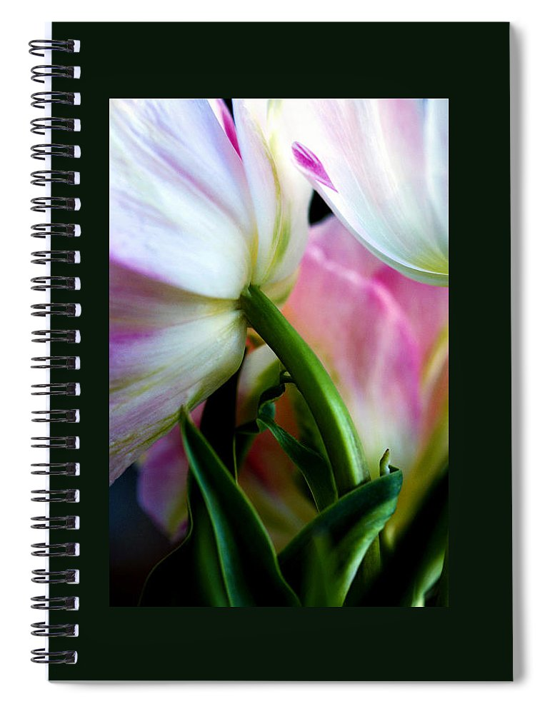 Flower Spiral Notebook featuring the photograph Layers of Tulips by Marilyn Hunt