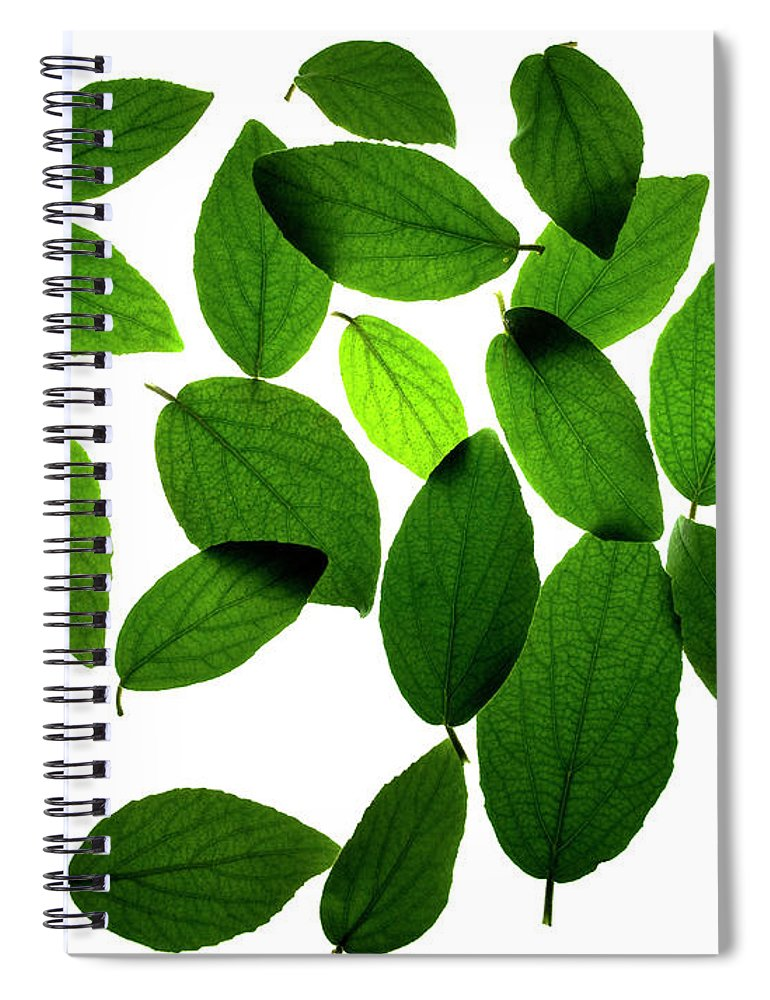 Leaves Spiral Notebook featuring the photograph Leaves on White by Jessica Wakefield