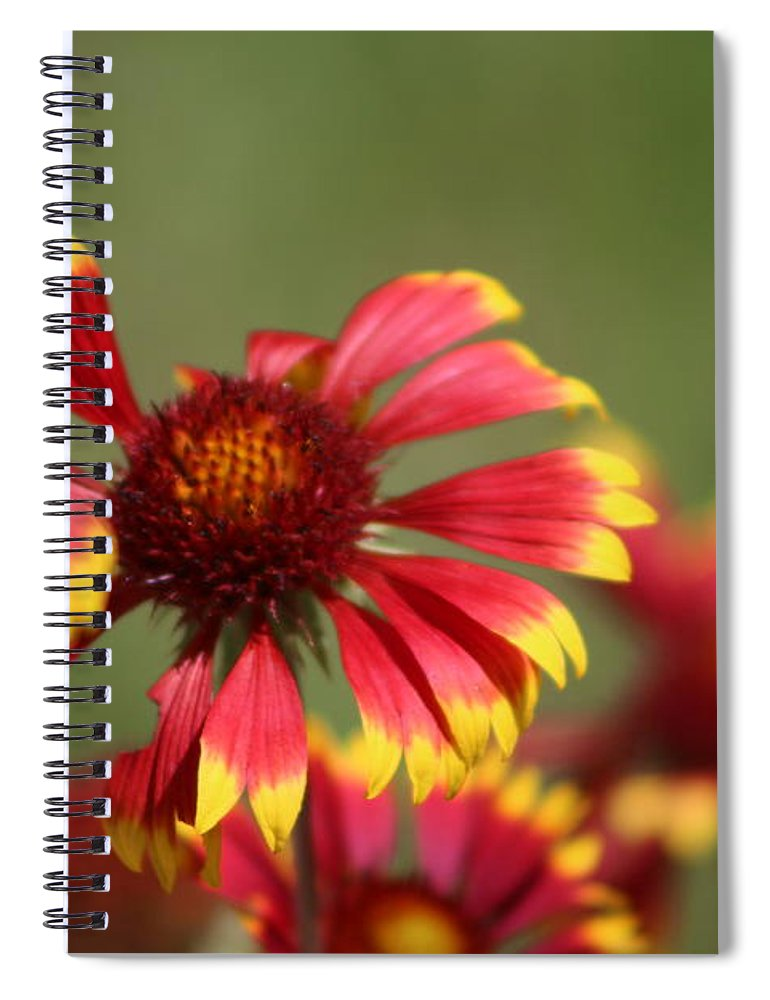 Coneflower Spiral Notebook featuring the photograph Lemon Yellow and Candy Apple Red Coneflower by Colleen Cornelius