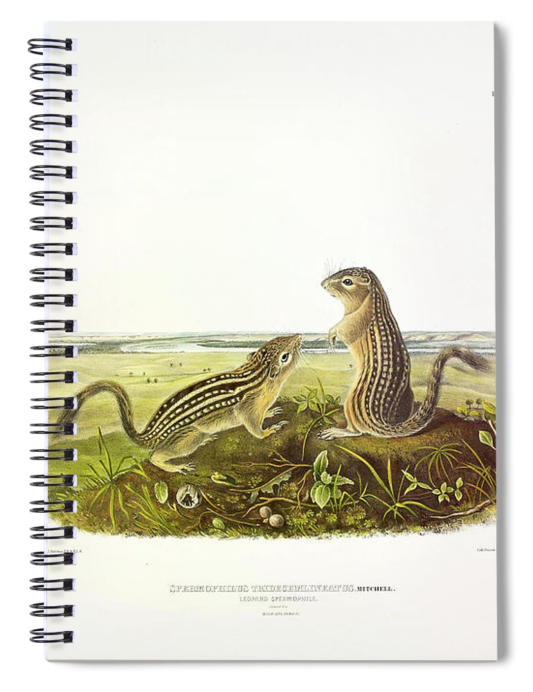 Thirteen-lined Ground Squirrel Spiral Notebook featuring the painting Leopard-spermophile by John James Audubon