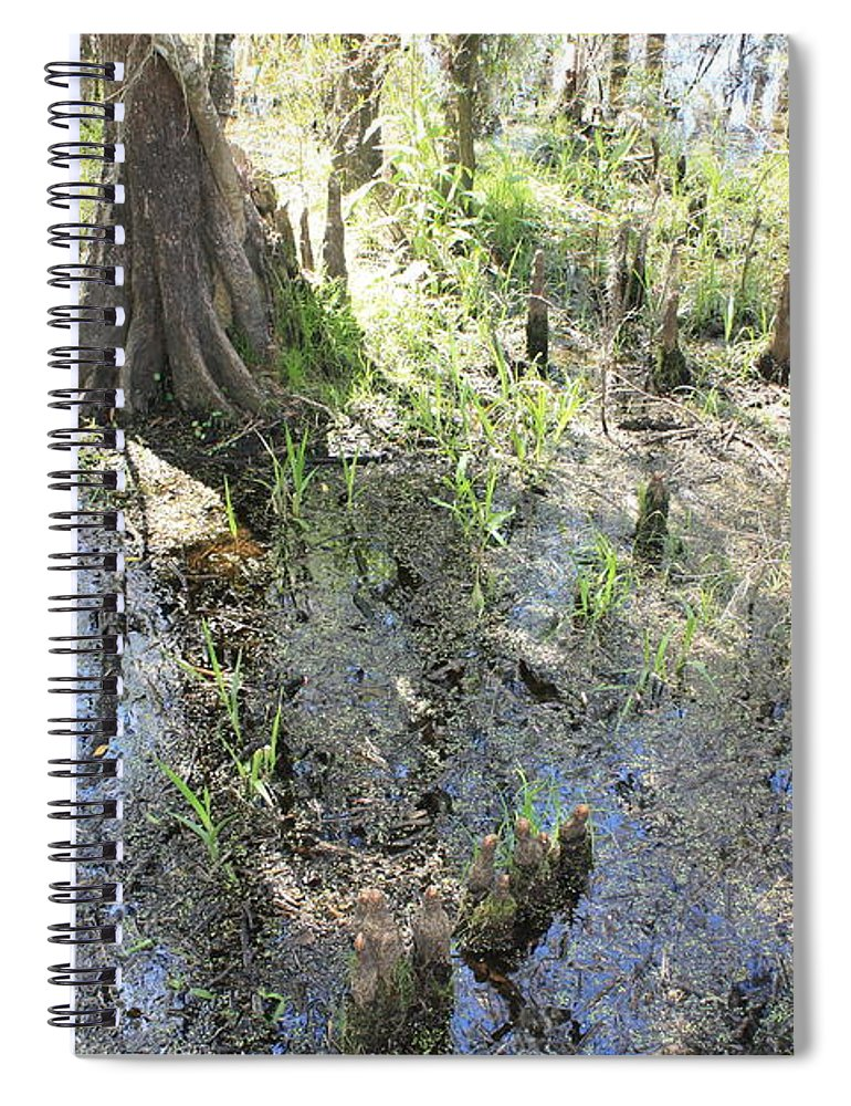 Lettuce Lake Spiral Notebook featuring the photograph Lettuce Lake Swampland by Carol Groenen