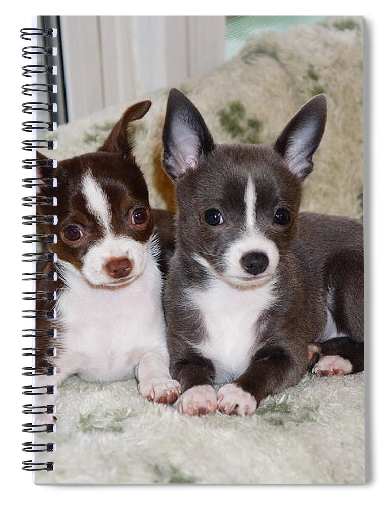 Ann Keisling Spiral Notebook featuring the photograph Lexi And Gracie by Ann Keisling