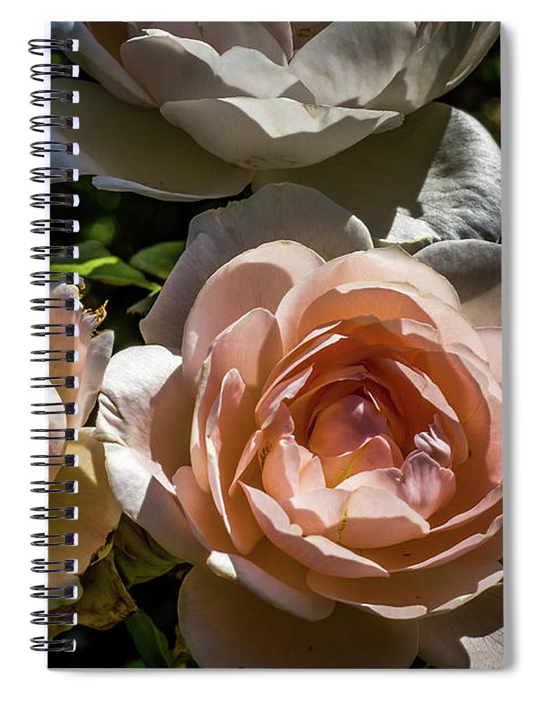 Natural Spiral Notebook featuring the photograph Light Pink Roses by Howard Roberts