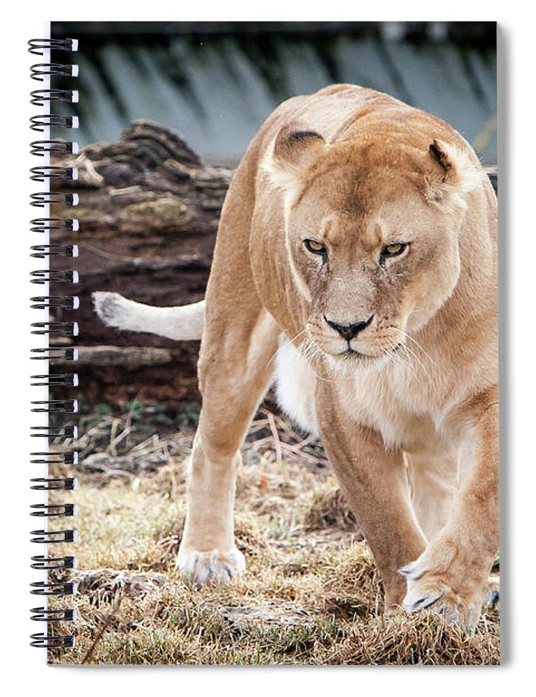Germany Spiral Notebook featuring the photograph Lion Eyes by John Wadleigh