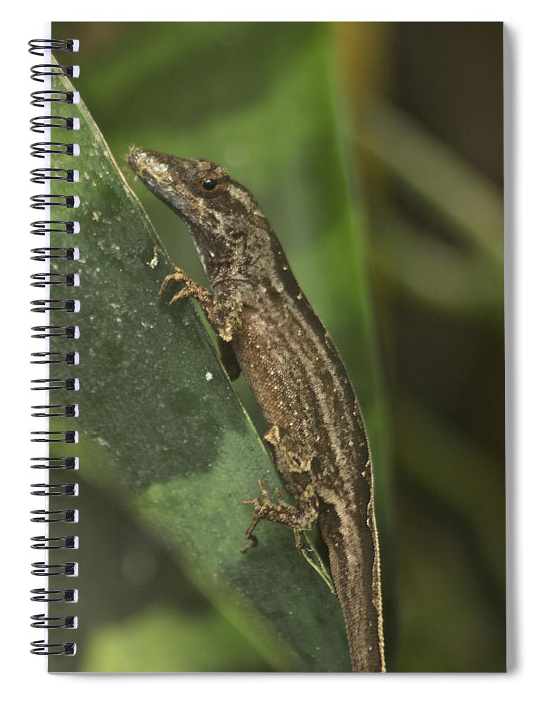 Wildlife Spiral Notebook featuring the photograph Lizard 3 by Michael Peychich