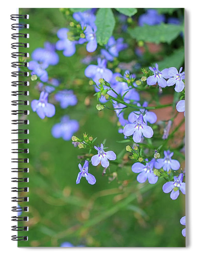 Blue Spiral Notebook featuring the photograph Lobelia Flowers by Karen Adams