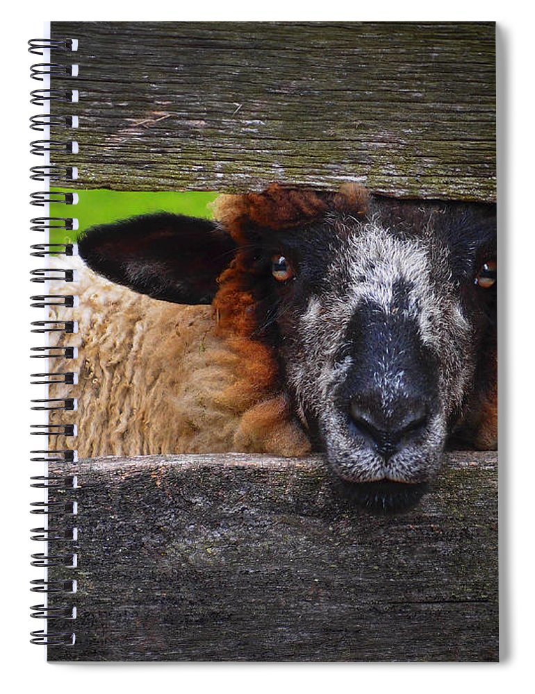Lookin At Ewe Spiral Notebook featuring the photograph Lookin at Ewe by Skip Hunt