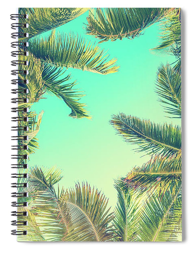 Palm Trees Spiral Notebook featuring the photograph Looking Up by Delphimages Photo Creations
