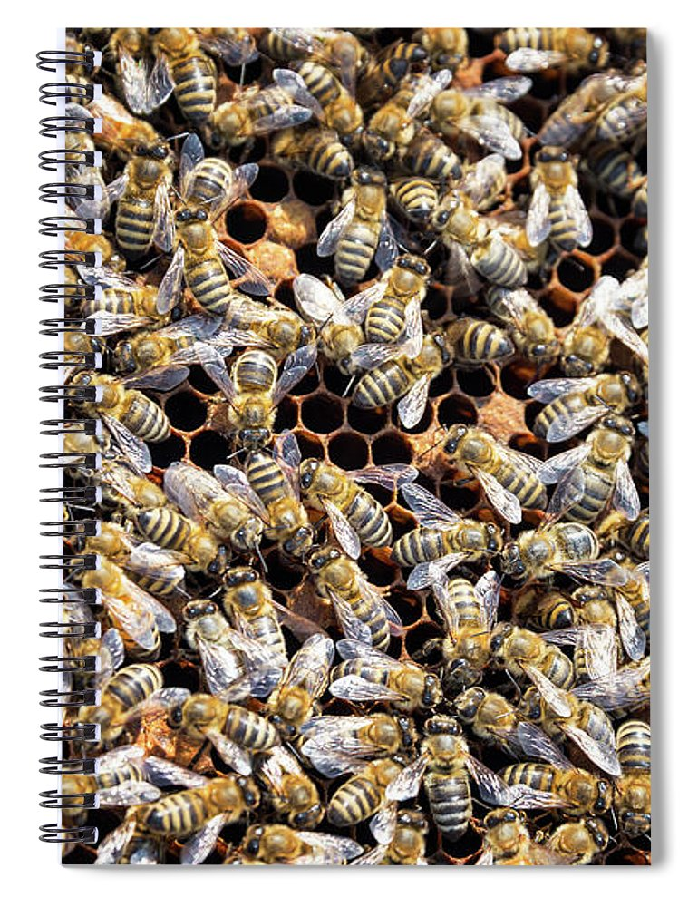 Bee Spiral Notebook featuring the photograph Lots and Lots of Bees by Jess Kraft