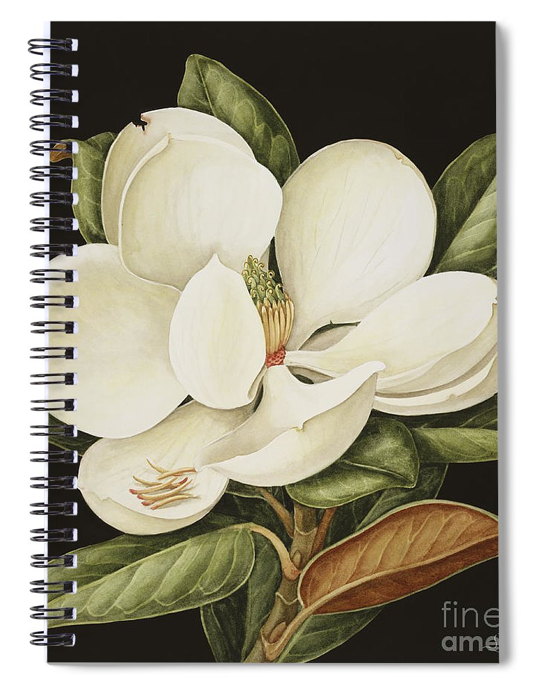 Still-life Spiral Notebook featuring the painting Magnolia Grandiflora by Jenny Barron