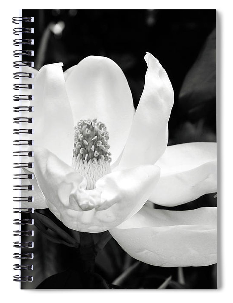 Magnolia Spiral Notebook featuring the photograph Magnolia Memories 3- By Linda Woods by Linda Woods