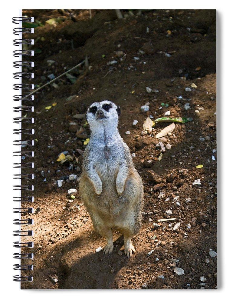 Meerkat Spiral Notebook featuring the photograph Meerkat Poising by Douglas Barnett
