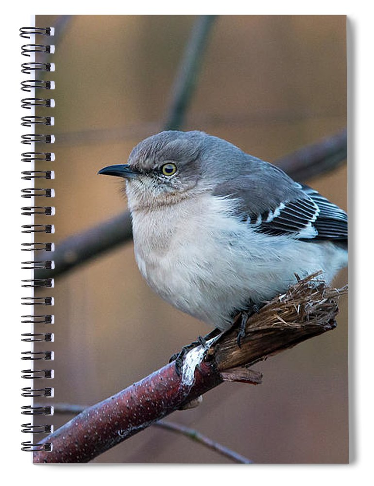 Mockingbird Spiral Notebook featuring the photograph Mockingbird by Eric Killian