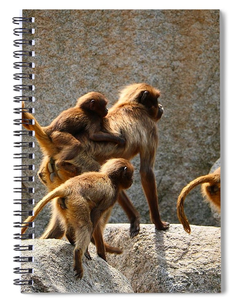 Animal Spiral Notebook featuring the photograph Monkey Family by Dennis Maier