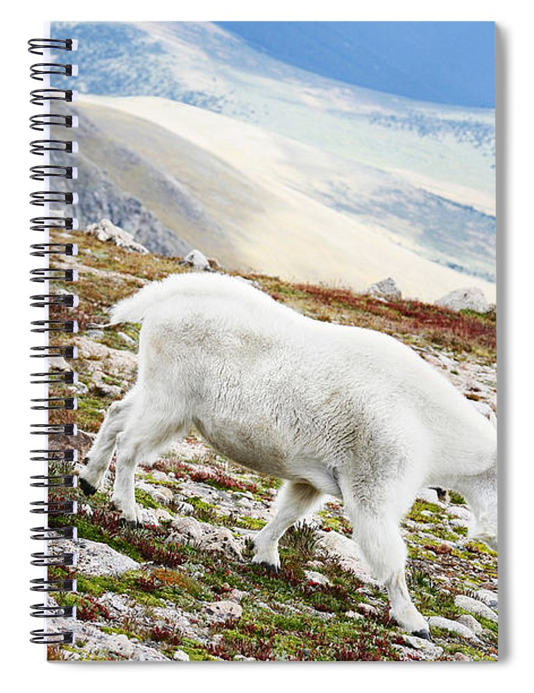 Mountain Spiral Notebook featuring the photograph Mountain Goats 1 by Marilyn Hunt