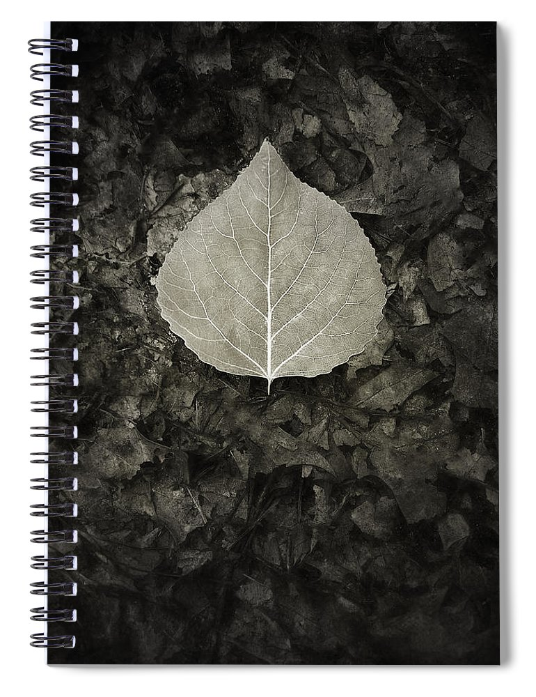 Leaf Spiral Notebook featuring the photograph New Leaf on the Old by Scott Norris