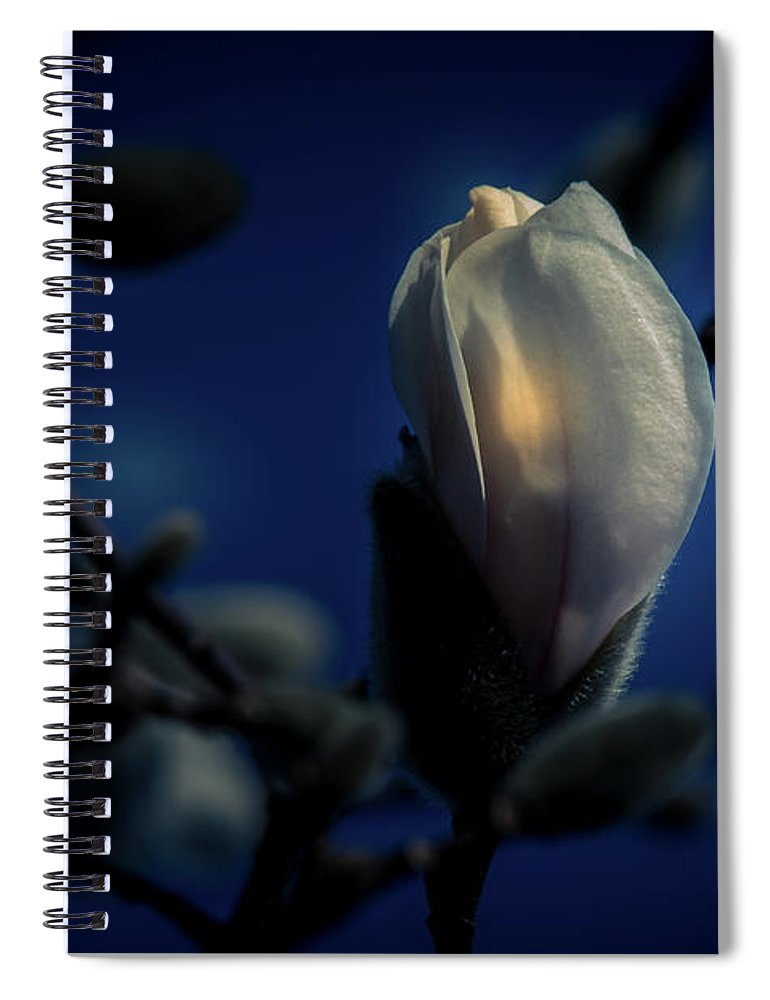 Flower Spiral Notebook featuring the photograph Night Lights by Allin Sorenson