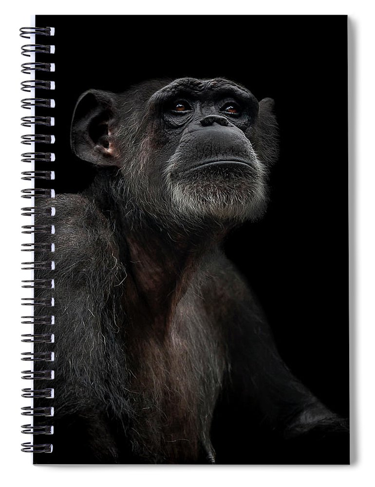 Chimpanzee Spiral Notebook featuring the photograph Noble by Paul Neville