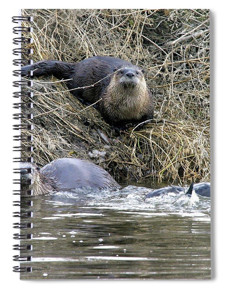 Klamath/goose Lake Basins Spiral Notebook featuring the photograph Northern River Otter, Lower Klamath Nwr, Oregon by Robert Mutch