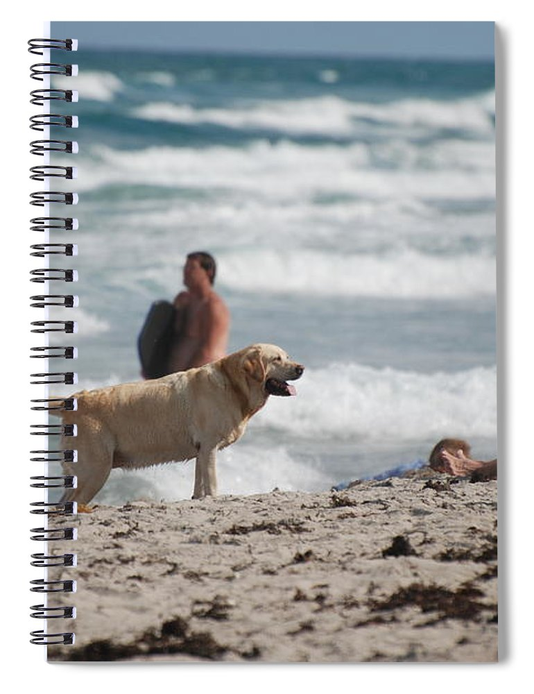 Waves Spiral Notebook featuring the photograph Ocean Dog by Rob Hans