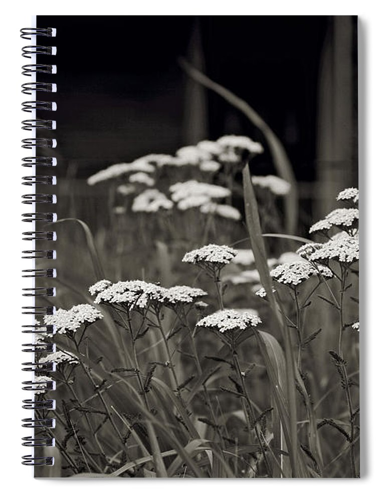 Flowers Spiral Notebook featuring the photograph Oklahoma Prairie Flowers by Toni Hopper