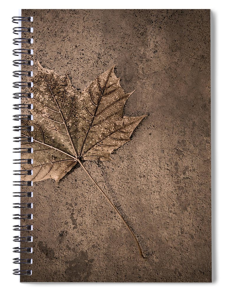 Scott Norris Photography Spiral Notebook featuring the photograph One Leaf December 1st by Scott Norris