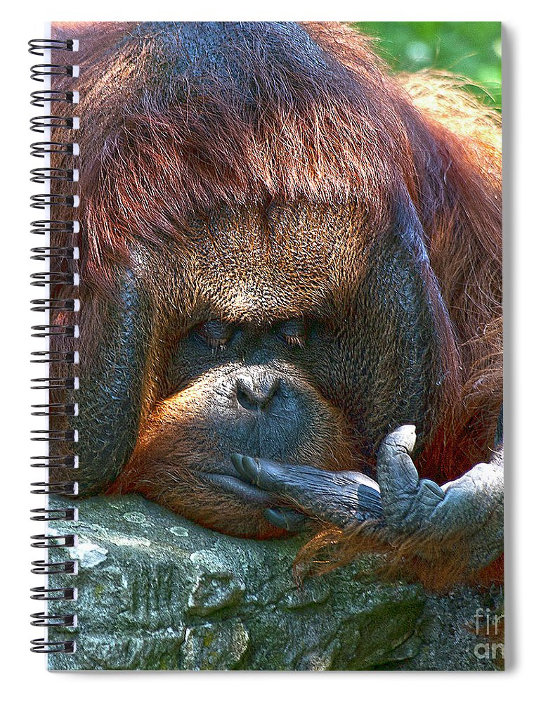Orang Untang Spiral Notebook featuring the photograph One Two Three by Heiko Koehrer-Wagner