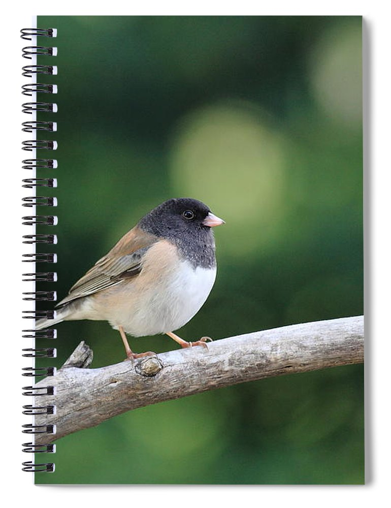 Wildlife Spiral Notebook featuring the photograph Oregon Junco by Wingsdomain Art and Photography