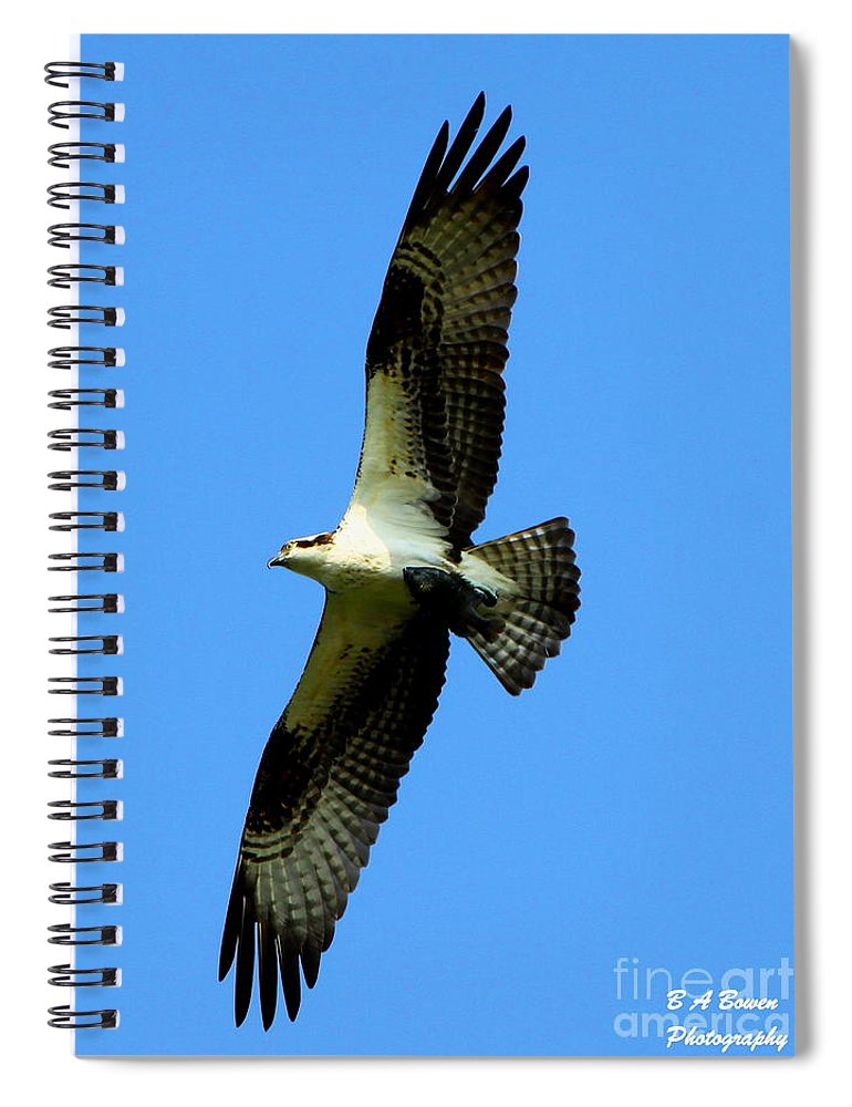 Osprey Spiral Notebook featuring the photograph Osprey Carrying A Fish by Barbara Bowen