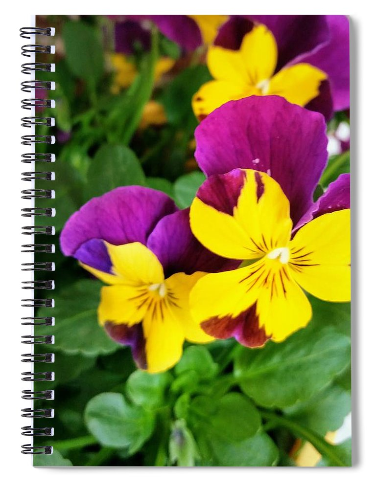 Pansies Spiral Notebook featuring the photograph Pansies 2 by Valerie Josi
