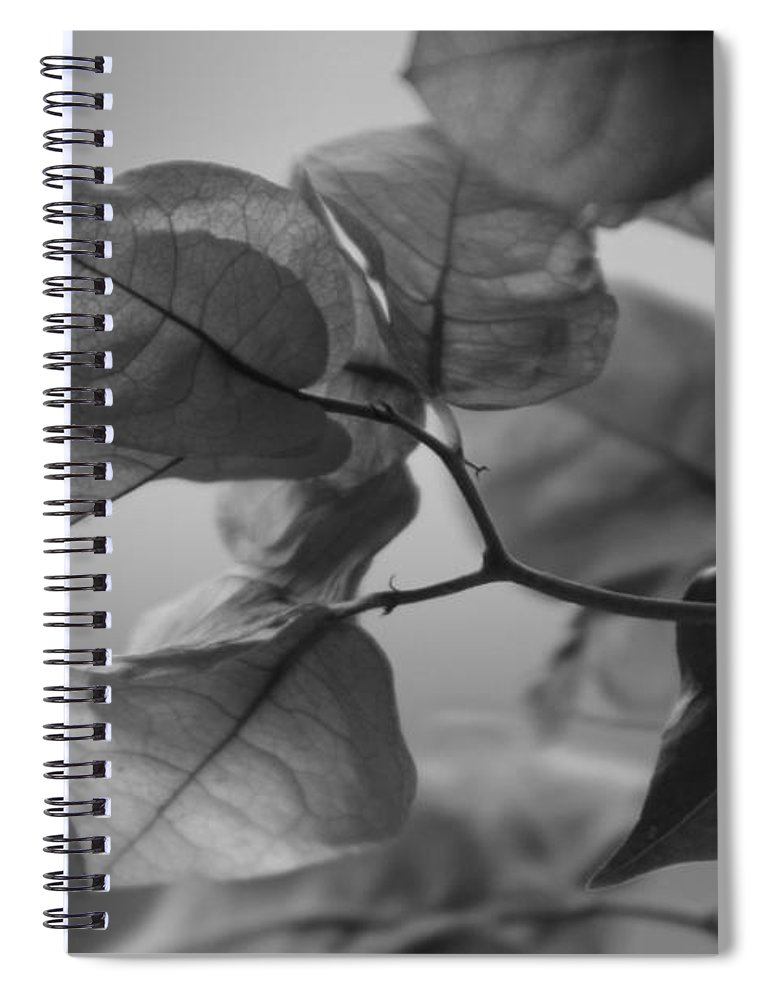 Bougainvillea Spiral Notebook featuring the photograph Paper Thin a Black and White Close Up Photograph of a Bougainvillea Bush by Colleen Cornelius
