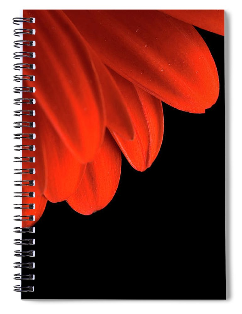 Flower Spiral Notebook featuring the photograph Petals by Jessica Wakefield