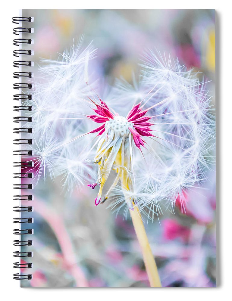 Pink Spiral Notebook featuring the photograph Pink Dandelion by Parker Cunningham