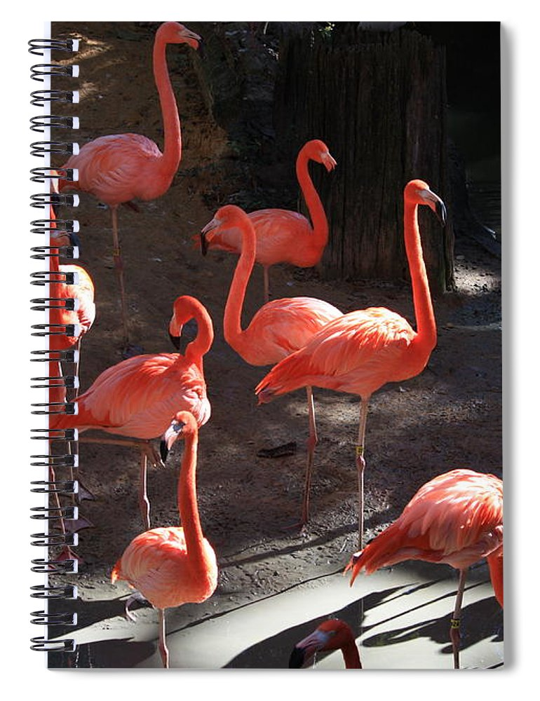 Pink Flamingos Spiral Notebook featuring the greeting card Pink Flamingos by Carol Groenen