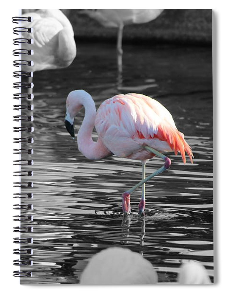 Palm Desert California Spiral Notebook featuring the photograph Pinky by Colleen Cornelius
