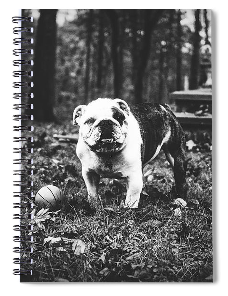 English Spiral Notebook featuring the photograph Play Ball by Unsplash