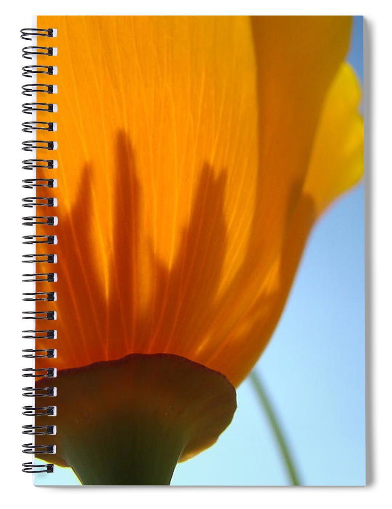 �poppies Artwork� Spiral Notebook featuring the photograph Poppies Sunlit Poppy Flower 1 Wildflower Art Prints by Baslee Troutman