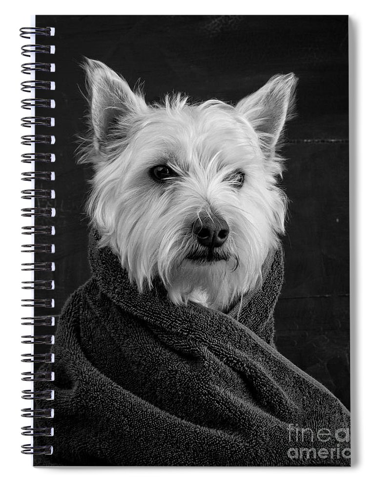 Portrait Of A Westie Dog Spiral Notebook featuring the photograph Portrait of a Westie Dog by Edward Fielding