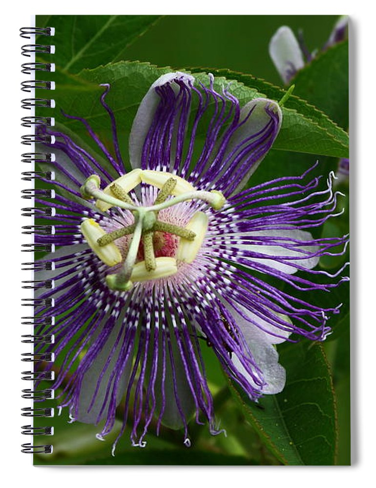 Passion Flower Spiral Notebook featuring the photograph Purple Passion Flower by Barbara Bowen